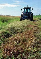 Switchgrass being harvested. (Department of Energy)