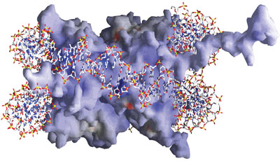 A nucleosome spool with DNA wrapped around it.