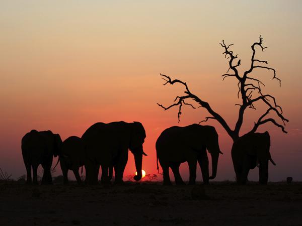 Do Elephants Have Souls? - The New Atlantis